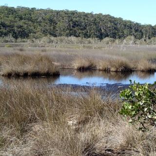 Awinya swamp