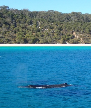 whale body